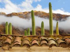 растение, облако, rooftop