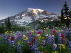 поле, цветочное, цветы