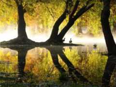 imágenes, otoño