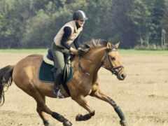 всадник, лошадь, трава