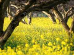 слово, yellow, цветы
