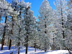 winter, zima, лес