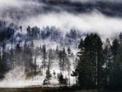 лес, sidney, foggy
