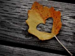 love, осень, сердце