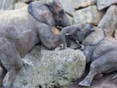 animal, слон, marine