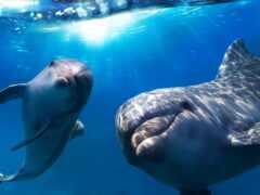 дельфина, oir, water