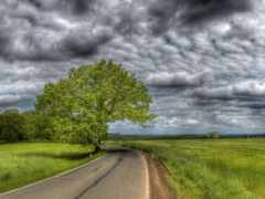 дорога, поле, асфальтная