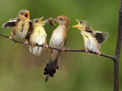 фото, птица, ave