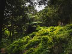 hike, телефон, дерево