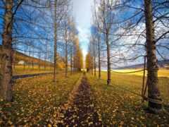 природа, осень, знаки
