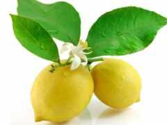 lemon, лист