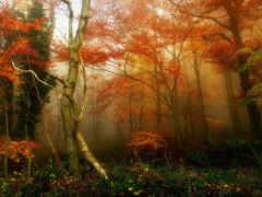 ди, autunno, природы