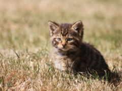 кот, gato, short