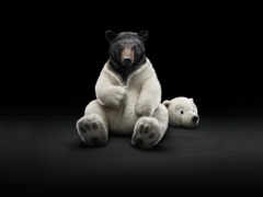 bear, ipad