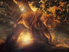 лев, львица, kot