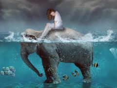 slon, хорошії, рыба