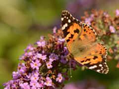 бабочка, насекомое, animal