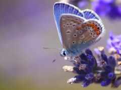 бабочка, крыло, цветы