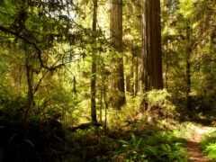 usa, floresta, natur