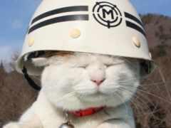кот, шлем, который