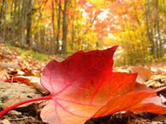 hour, осень, руб
