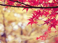 осень, лист, дерево