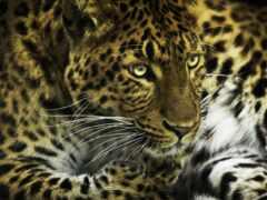 кот, леопард, funart
