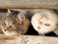 котики, милые, красивые