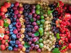 news, ягода, fresh