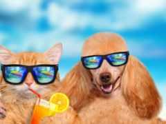 очки, собака, море