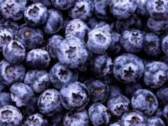 черника, использование, ягода