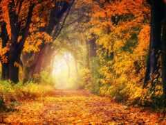 осень, золотистый, листва