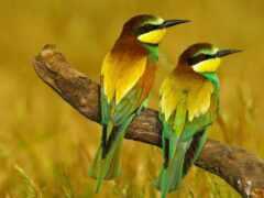 цитата, птица, marian
