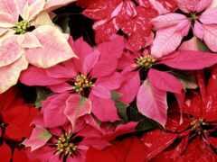 цветы, красивый, pleasant