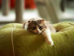 уже, кот, кошки