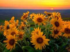 вечер, род, цветы
