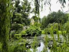 природа, пруд, park