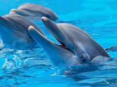 дельфины, дельфинами, фотообои