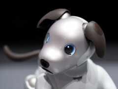 robot, собака, game