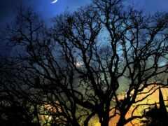 ночь, луна, дерево