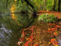 осень, park, красивый