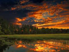 закат, лес Фон № 31975 разрешение 1920x1080