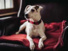 собак, бесплатные, картиники