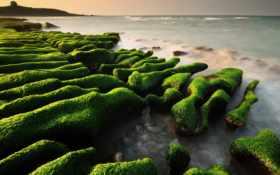 wallpaper, mossy