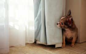 dog, wallpaper Фон № 6156 разрешение 1920x1200