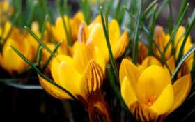 желтые, прелестные