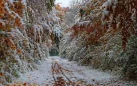 снег, осень