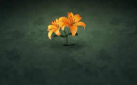 цветы из-под земли