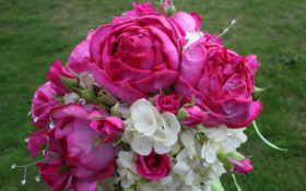 цветы, букеты, гортензия