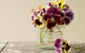 глазки, анютины, цветы Фон № 70807 разрешение 1920x1200